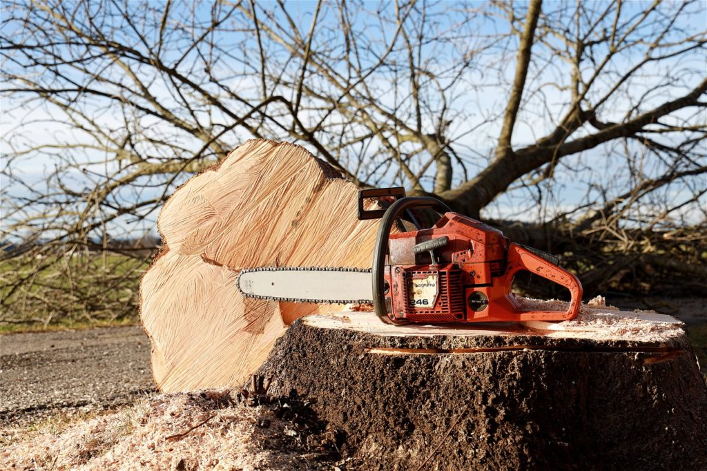 chainsaw, tree, tree pruning